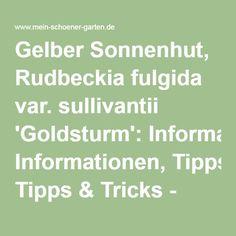Gelber Sonnenhut, Rudbeckia fulgida var. sullivantii 'Goldsturm': Informationen, Tipps & Tricks - Mein schöner Garten Tricks, Gold, Gardening, Nice Asses