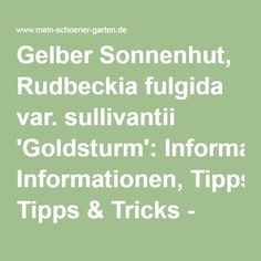 Gelber Sonnenhut, Rudbeckia fulgida var. sullivantii 'Goldsturm': Informationen, Tipps & Tricks - Mein schöner Garten