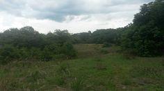 La selva en el fundo Morropón, Iquitos