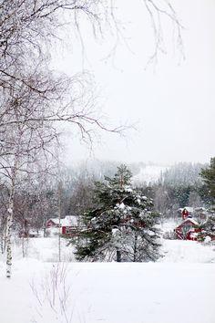 Laponie | Lapland #14