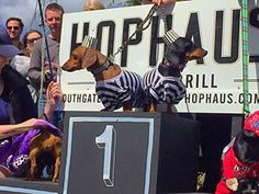 These two jailbirds actually won best dressed. | 15 Pictures Of Wiener Dogs In Costumes Having The Time Of Their Lives