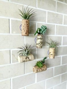 Best seller 5 air plant cork magnets Now by omorfigiadesigns