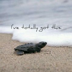 Positive Quotes : QUOTATION – Image : Quotes Of the day – Description Take a leap of faith into the next wave. For the app of beautiful wallpapers ~ www.everydayspiri… xo Sharing is Power – Don't forget to share this quote ! Baby Sea Turtles, Cute Turtles, Turtle Baby, Turtle Quotes, Turtle Love, Beach Quotes, Summer Quotes, Jolie Photo, Positive Life