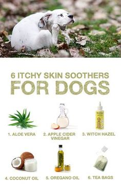 Does your pup struggle with itchy skin? Here are 6 natural skin soothers that ease the discomfort.