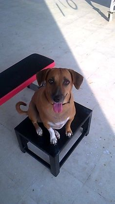 Whitepaw has a long tongue and is great at box jumping.