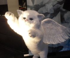 "angel-slave: ""A baby angel "" Baby Cats, Cats And Kittens, I Love Cats, Cute Cats, Cat Icon, Cat Aesthetic, Cute Little Animals, Cat Memes, Fur Babies"