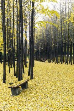 "Inspiration Wald : ""Yellow Fall"" Seoul, South Korea"