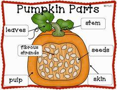 Pumpkin Patch CCSS Math, Science, & ELA Centers and Activities for Kindergarten. Fall Preschool, Preschool Science, Preschool Cooking, Preschool Classroom, Parts Of A Pumpkin, Grande Section, Autumn Activities, Stem Activities, Halloween Science