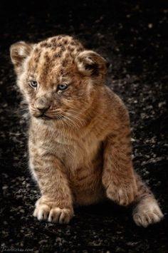 Cub! ✿⊱╮