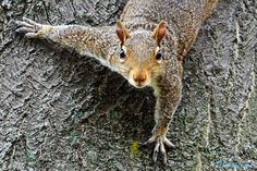 """""""The Amazing Spider #Squirrel"""" by Randy Wilkerson 