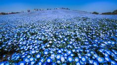 Blue heaven Photo by Hidenobu Suzuki