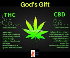 Stellar Canna is the best CBD Oil available. Visit us at stellarcanna.com to learn why Stellar Canna is a product that can and will change your life forever! Visit us at stellarcanna.com for all your CBD needs. #cbdhempoil #cbd #hempoil #longlife #cbdforhumans #cbdcancer #cbdanxiety #cbdpain #cbdsoap #cbdlotion #cbdoil #naturalremedies #lupus #crohns #crohnsdisease #chemo #cancercurenatural #stellarcanna
