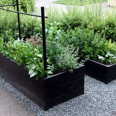 Garden boxes in gravel. Garden boxes in gravel. Potager Garden, Veg Garden, Vegetable Garden Design, Garden Boxes, Edible Garden, Garden Landscaping, Back Gardens, Outdoor Gardens, Raised Vegetable Gardens