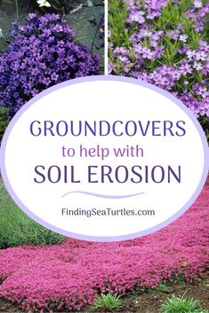 15 Best Flowering Ground Covers for Sun - Finding Sea Turtles 15 Best Flowering Ground Covers for Su Ground Covers For Sun, Ground Cover Plants Shade, Ground Covering Plants, Best Ground Cover Plants, Ground Cover Flowers, Perennial Ground Cover, Garden Yard Ideas, Lawn And Garden, Gardening