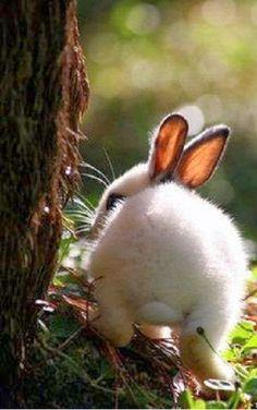 Bunny Butt! March 30, 2014