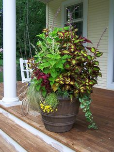 NGB Year of the Coleus: Several varieties of coleus, Mexican feather grass and other plants give this container garden a soft, free-form look. HGTV