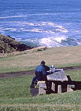 ROCKY CREEK STATE SCENIC VIEWPOINT  Rocky Creek is a spectacular ocean-front park on a forested bluff overlooking the ocean. Offshore rocks provide spectacular wave action in storms and are nesting areas for birds and sea lions. The viewpoint is an official Whale Spoken Here site for watching migrating and resident gray whales.  picnic, restrooms, marine mammal/wildlife/bird watching.