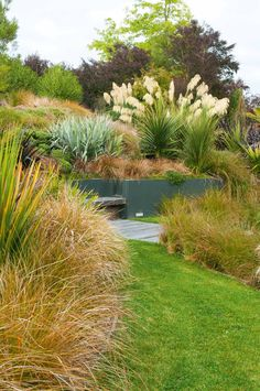Gardens Nz New Zealand ` Gardens Nz - Modern Beach Gardens, Outdoor Gardens, Steep Gardens, Australian Garden Design, California Native Plants, Hillside Landscaping, Landscaping Ideas, Meadow Garden, Garden Shrubs