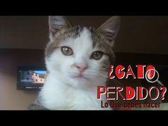 ¿Porque mi gato me muerde o rasguña cuando lo acaricio? - YouTube