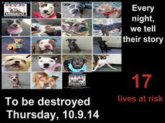 TO BE DESTROYED: 17 Dogs to be euthanized by NYC ACC- THURS. 10/09/14. This is a HIGH KILL shelter group. YOU may be the only hope for these pups! ****PLEASE SHARE EVERYWHERE!!To rescue a Death Row Dog, Please read this: http://urgentpetsondeathrow.org/must-read/  To view the full album, please click here: https://www.facebook.com/media/set/?set=a.611290788883804.1073741851.152876678058553&type=3