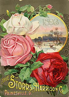 Catalog Information    Company Name:  Storrs & Harrison, Co.    Catalog Title:  1893 (1893)  Publication Information:  Painesville, OH  United States  Category(ies) of Cover Art:  Roses