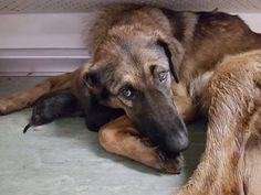 Em busca de um lugar quentinho e seguro, uma cadela acabou escolhendo um vagão de metrô para dar à luz seus nove filhotes em Moscou, na Rússia.Após os func...