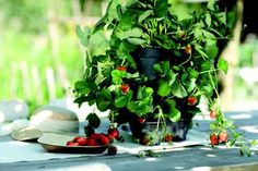 Je možné v květináči pěstovat zeleninu?