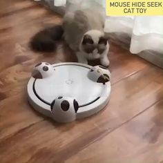 Cat Activity, Cat Towers, Cat Enclosure, Cat Room, Funny Animal Videos, Cool Cats, Dog Toys, Cats And Kittens, Fur Babies