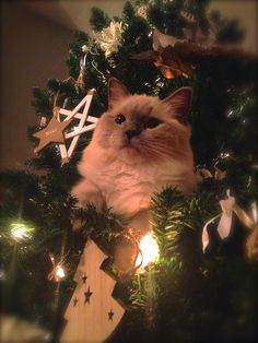 We have a new cat ornament in our tree