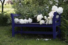 Gartenfotografie für Mehr als nur ein Garten » Ihr Gartengestalter im Rheingau » Aktuell in unserem Rosengarten
