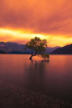 The Lone Willow Tree by Andre Distel on 500px