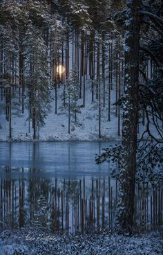 "afaerytalelife: ""Winter Moonrise, by Asko Kuittinen. "" afaerytalelife: ""Winter Moonrise, by Asko Kui Winter Szenen, I Love Winter, Winter Magic, Winter Time, Winter Moon, Winter Photography, Nature Photography, Shoot The Moon, Beautiful Moon"