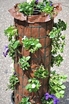 Discover how to make a gorgeous flower tower! See the fully grown tower here! It… Discover how to make a gorgeous flower tower! See the fully grown tower here! It's a really beauty! Water Flowers, Flower Petals, Diy Flowers, Flower Tower, Tower Garden, Plant Tower, Tomato Cages, Self Watering, Geraniums