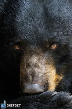 Video: Man Nearly Mauled by Black Bear in Great Smoky Mountains National Park