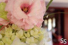 Lisantus Rosado/Pink Lisantus