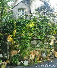 Pin by Herbalworld on ハーバルハウスの庭 Zen Rock Garden, Garden Cafe, Garden Junk, Garden Shop, Green Garden, Balcony Garden, Garden Paths, Home And Garden, Outdoor Walls