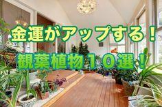 金運がアップする観葉植物10選!風水を良くしてお金を掴め! | 風水や開運法をご紹介!金運を運ぶブログ「金の宝船」