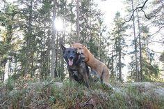amizades animais improváveis 3