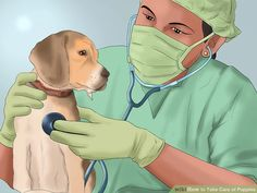 Image titled Take Care of Puppies Step 28
