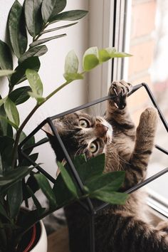Feel like being cubist today – Cats n' Cubism Kittens Cutest, Cats And Kittens, Cute Cats, Funny Cats, Animals And Pets, Cute Animals, Cat Empire, Cat Plants, Amor Animal
