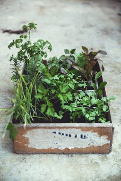 Horta em casa Herb Garden, Vegetable Garden, Garden Plants, Indoor Plants, House Plants, Box Garden, Garden Mulch, Micro Garden, Indoor Herbs