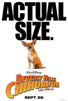 Movie Poster Designs - Beverly Hills Chihuahua