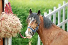 Processed or Natural - Which Feed is Better for Horses?