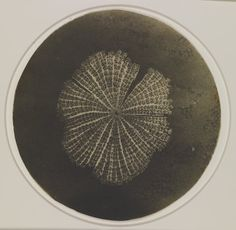 .William Henry Fox Talbot - Photomicrograph of a diatom, nd