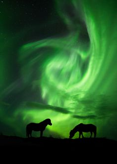 """""""Lost in the nightlights"""" - Portrait of the Icelandic horses under the lights. Prints and licensing are available on my website: http://www.arnarkristjansphotography.com/"""