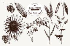 Plant growing sketch collection by ievgeniia on Creative Market
