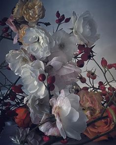 #Regram via @nick_knight Bloom Where You Are Planted, Knight, December, Rose, Garden, Plants, Painting, Instagram, Art