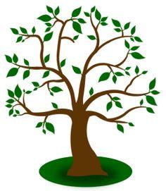 Apfelbaum_ohne_Aepfel