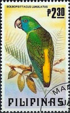 Filipinas 1984 - El Lorito Guayabo o Guayabero, es una especie de ave de la familia de los loros,endémica de las selvas de Filipinas