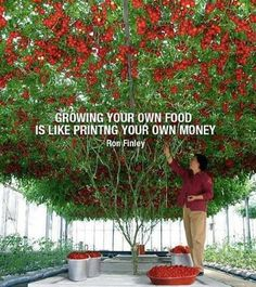 Did you know that organic backyard farmers are eating well and shaving hundreds of dollars off their grocery bill each year?